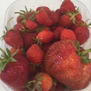 Primeur aardbeien
